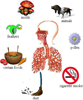 envrionmental-allergy-and-asthma-diagram