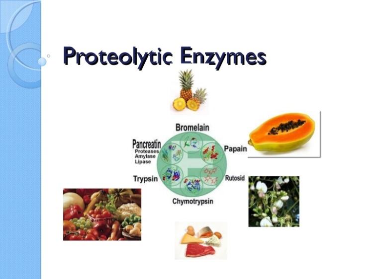 proteaseenzymes-151006023528-lva1-app6892-thumbnail-4