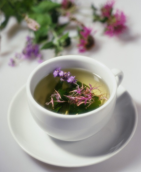 Skullcap-Tea-Pictures